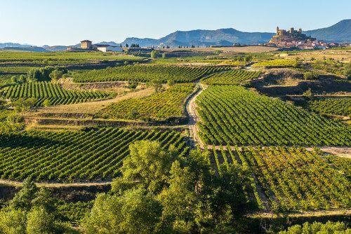 The picturesque La Rioja wine region of Spain.