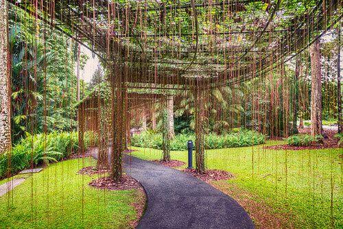 In the Singapore Botanic Gardens, stylish walkways can be seen.