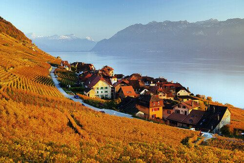 The vineyard terraces in the famous Lavaux Wine Region overlooking the northern shores of Lake Geneva in Switzerland.