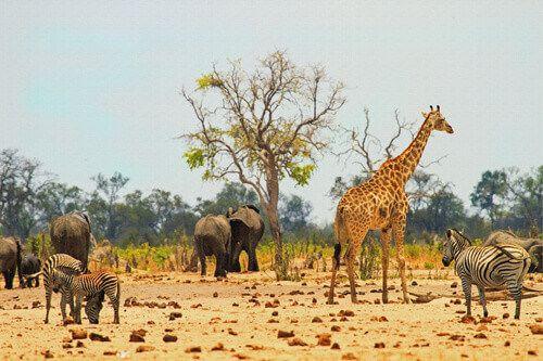 Animals in Hwange National Park in Zimbabwe.