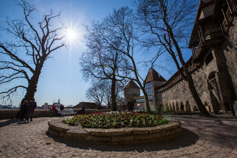 Large trees and structures in the Toompea Castle in Tallinn Old Town.