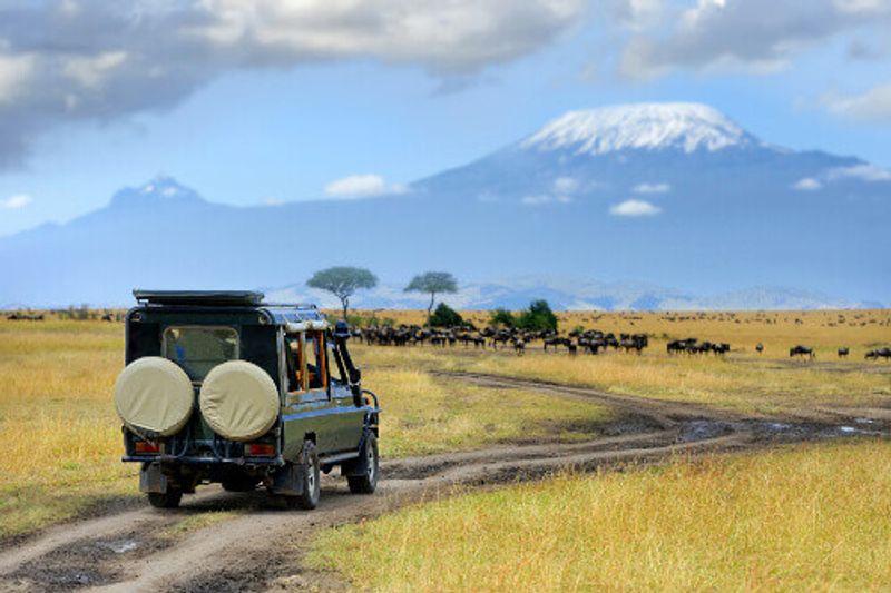 A safari game drive with wild animals in view, Masai Mara Reserve.