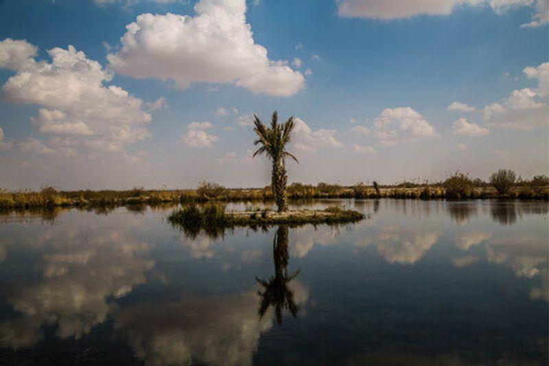 Azraq Wetland Reserve in Jordan