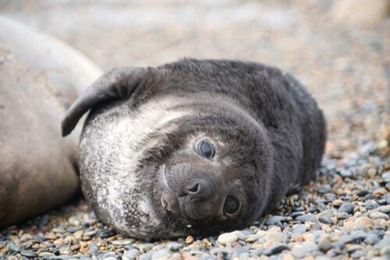 A seal in Península Valdés, Argentina.