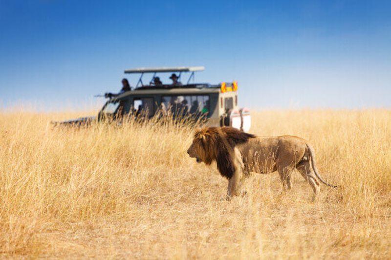 Tourists see a lion from a safe distance at a Kenyan safari park.