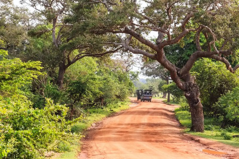 Lush trees surround a road in the Yala National Park – an unmissable tourist spot.