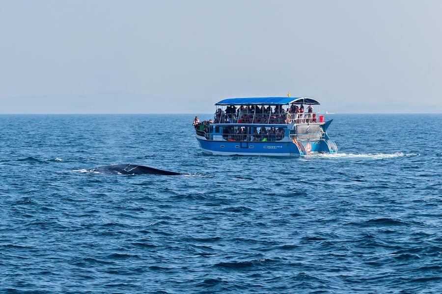 A Sri Lankan tourist boat on a  whale watching tour near Mirissa.
